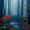 MDRF Woods