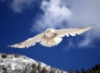 Неясыть Fly free