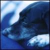 bitwhizzle userpic