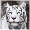 agp_photo userpic