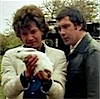 lysimache: the professionals: bunnay!