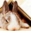 wiggiemomsi: book plot bunny