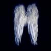 fairykairy userpic