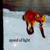 ♫ kitsu kitsu kits! ♫: fox -- at the speed of light