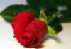 Lana: Роза