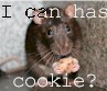 rat cookie