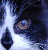 ziggymork userpic