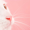 KITTY :: Pink Nose