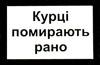 ignis_b: kurci