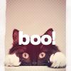 kika-k: cat boo!