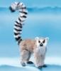 lemuro4ka userpic