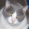 Cat - Marten