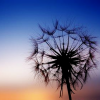 suzy_garfein userpic