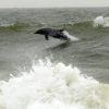 cetaceanscene userpic