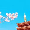 Michelle: sakura and temple