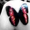 みな •‥: butterfly