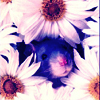 souris_bleue userpic