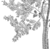 Tree Genome