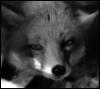 cleo_vixen userpic