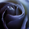 rosesnchaos userpic