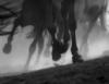 wild_horse101