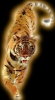 tigreincare userpic