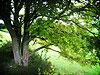 ushi69 userpic