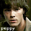 Supernatural: Puppy Sam (from ELAC)