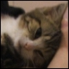 lila_the_cat userpic