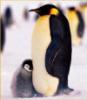 penguinsteph userpic