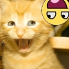 Kitten Yellow Face