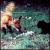 foxnkitten userpic