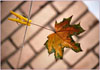 Ольга: autumn2