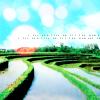 [ rice fields ]