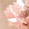 Nikki: flower2