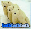 Beth H: Bears 3 Bears (blunaris)