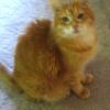 Impressionist cat