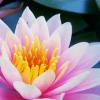 Glass_lillies