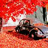 Autumn Bug