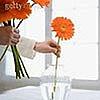 gerberi v vaze