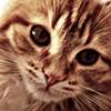 svoi_kosh userpic