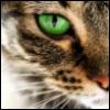 cat eye green