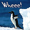wheee penguin