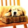 Puppy + Book