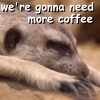 Laura Anne Gilman: meerkat coffee
