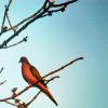 stock - bird - me