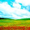 scenery: idyllic