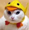 Anna S.: cat_chicken