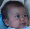 kid - gerber baby.