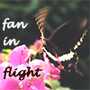 Elke Tanzer: butterfly fan in flight